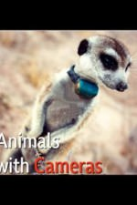 Animals With Cameras: Season 1