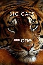 Big Cats: Season 1