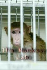 The Monkey Lab